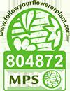 MPS Siegel